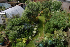 Looking Down on the Back Garden - June 2016 (basswulf) Tags: backgarden polytunnel d40 1855mmf3556g lenstagged unmodified 32 image:ratio=32 permissions:licence=c 20160625 201606 3008x2000 lookingdownonthegarden normcres oxford england uk