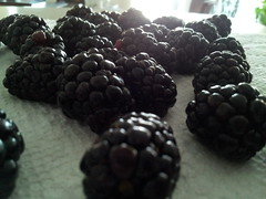 Blackberries (StarryGwee) Tags: fruit berry berries blackberry blackberries