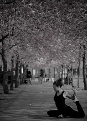 Workout under the cherry tree.(Explore) (Robban.G) Tags: pink sunlight black cherry spring nikon women sweden stockholm rosa acrobat workout cherrytree d800 bending skugga kungstrdgrden cherryflowers kungsan krsbrstrd stretcha krsbrsblommor trna rosablommor