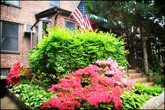Sunnyside Gardens in Bloom 17 (The Whistling Monkey) Tags: flowers queens bloom springtime gardendistrict queensny sunnysidegardens sunnysidequeens sunnysideny nyneighborhood