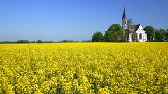 Rape field 2 (radimersky) Tags: blue sky panorama church field rural lens landscape four lumix countryside spring europa europe may poland polska rape pole panasonic filter micro pancake polarized 43 brassica thirds maj wiosna napus koci filtr polarizing niebo 14mm krajobraz wie opolskie 1920x1080 wiejski polaryzacyjny kociek sidzina dmcgf1 rzpeak niebeskie
