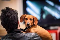 "Foto da cani - Bau Bau Bau!! (""Strlic Furln"" - Davide Gabino) Tags: pictures dog me look cane foto occhi sguardo gli palazzocontemporaneo"