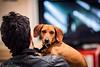 "Foto da cani - Bau Bau Bau!! (""Stròlic Furlàn"" - Davide Gabino) Tags: pictures dog me look cane foto occhi sguardo gli palazzocontemporaneo"