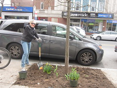 Forest Hills Green Team on Continental Avenue Honors Earth Day, April 20, 2013 (Rego-Forest Preservation Council) Tags: flowers trees spring queens environment earthday volunteerism continentalavenue goinggreen michaelperlman regoforestpreservationcouncil april202013 stevemelnick foresthillsgreenteam