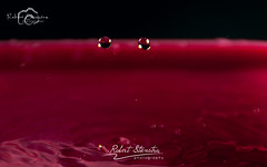 Droplet photography 9 (Robert Stienstra Photography) Tags: water droplets drops droplet waterdrops waterdropphotography dropletphotography robertstienstraphotography