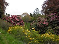 Glendurgan Garden (National Trust) (dsriley1) Tags: cornwall nationaltrust glendurgangarden