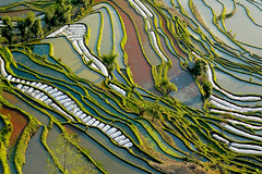 80661 Rizires yunnan (ichauvel) Tags: china trees water landscape asia eau colours view couleurs arbres getty asie yunnan paysage ricefields vue chine riceterraces vgtation graphisme graphism rizires yuangyuang