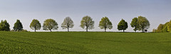 May Panorama (L I C H T B I L D E R) Tags: trees panorama field germany spring may feld mai bume dorp frhling linde mettmann tiliaplatyphyllos fieldtrees sommerlinde
