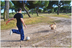 Hora de jugar. (nelita.vj) Tags: boy dog naturaleza nature animal animals ball nikon perro chico pinar pelota baln d3100 nelitavj