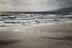 melancola del mar poeta (Nuria Domnguez) Tags: mar andaluca playa cadiz tarifa
