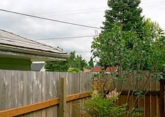 Yard, Portland, OR