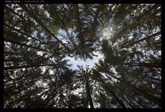 _G001929 copy (mingthein) Tags: trees nature digital forest landscape republic czech availablelight 28mm v gr ming ricoh 21mm onn 2013 apsc thein photohorologer mingtheincom