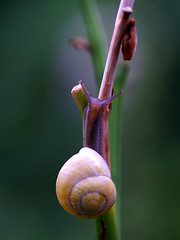 On the way up! (Jaedde & Sis) Tags: snail climbing dof herowinner gamewinner challengefactorywinner thechallengefactory challengeclubwinner challengegamewinner