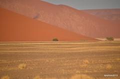 Lineare (Liv ) Tags: africa nikon desert dune namibia namib 2013 esplorazioni laivphoto