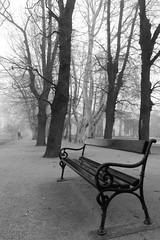 (.e.e.e.) Tags: city blackandwhite bw lake fog hungary bank explore balaton allee siófok panasoniclumixg3 olympusmzuikodigitaled918mmf456
