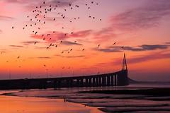 Pont de Saint-Nazaire (Philippe POUVREAU) Tags: bridge sunset river ngc pont loire mouette saintnazaire estuaire loireatlantique saintbrévin pontsaintnazaire saintbrevinlespins brivet