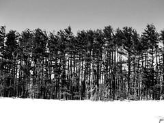 BarCode - Baldpate Mountain (Tim Loesch) Tags: trees sky blackandwhite bw white snow black blackwhite newjersey nj barcode mercercounty baldpate