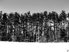 BarCode - Baldpate Mountain (Tim Loesch) Tags: trees sky blackandwhite bw white snow black blackwhite newjersey nj barcode mercercounty baldpate