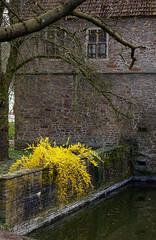 Rombergpark Botanical Garden, Dortmund (GardenTraveller) Tags: park building brick yellow stone wall germany garden botanical deutschland spring pond forsythia garten dortmund frhling torhaus botanischer rombergpark romberg