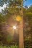 قوية بلونها (L.Q.Photography) Tags: نور ولا لنا القمر الشمس بالليل قال تطلع أما أهم ظلمة مين ينور فكاهة والدنيا بيطلع محشش أصلا سألوا القمر؟ طبعاالقمر بالنهار
