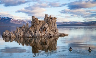 Mono Lake Ducks at Sunrise, California ( View Large! )
