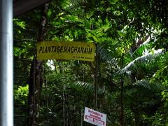 Machanaim Plantation - Suriname
