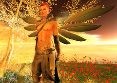 Golden Sea at Heaven, Oyster Bay (niki wirefly) Tags: male wings sl fairy secondlife fairey niki fae