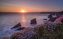 Bedruthen sunset (pixellesley) Tags: ocean flowers sunset sea seascape water clouds landscape evening movement rocks cornwall waves sundown cliffs atlantic thrift foam breeze hightide bedruthensteps diffusedlight seapinks lesleygooding
