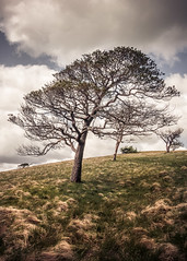 lean (Dave Fieldhouse Photography) Tags: trees summer portrait tree clouds walking outdoors countryside nationalpark lakedistrict cumbria daytime hillside midday fell greatmellfell lancashirelife sonyrx100iii