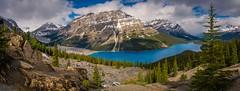Peyto Lake Panoramic (Stevie J Reed) Tags: nikon panoramic banff peytolake 2016 stevereed