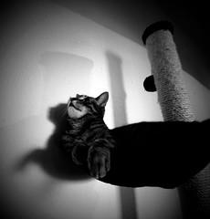 schwarzweiss69 (Ela's Zeichnungen und Fotografie) Tags: schwarzweiss kater kratzbaum schattenspiel