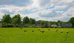 Dutch Landscape (JaapCom) Tags: trees netherlands dutch animals clouds landscape natural natuur paysbas landed veluwe landschap fee gelderland hollanda wezep jaapcom