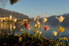 _DSC4778.jpg (danielwaelty) Tags: schweiz see europa natur montreux genf
