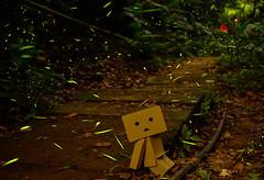 愣哥賞螢夜(DSC_8136) (nans0410(busy)) Tags: taiwan 台灣 firefly toucheng 螢火蟲 土城 阿愣 newtaipei 青雲路 新北市 chingyunroad