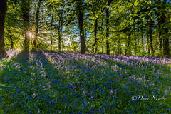 Sunburst On Bluebells (davenewby123) Tags: longexposure sunset sea sky mountain lake plant seascape tree beach water field bluebells skyline clouds river landscape boat seaside movement fishing waterfront bright outdoor dusk hill foliage shore vehicle serene fishingboats wirral foothill merseyside rive irishsea delamere delamereforest heliopan sheldrakes canon6d davenewby sigma24105
