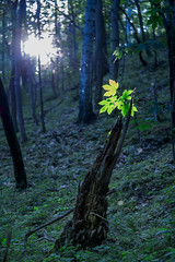 Dance of the fairy (dlorenz69) Tags: wood light sunlight leave forest evening abend licht dance elf fairy tanz rays blatt wald fee lichtstrahl