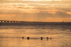 The Bridge (Infomastern) Tags: bridge sunset sea water bro malm vatten hav solnedgng sibbarp resundsbron