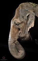 Broken Soul (Claudio Cantonetti) Tags: travel light portrait elephant black broken nature colors face animal mammal nikon wildlife profile soul claudio d7000 cantonetti