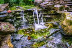 Man-made Serenity (GlennPope) Tags: plant nature water leaves rock stone austin outside outdoors us waterfall pond texas unitedstates outdoor serene hdr zilkerbotanicalgardens