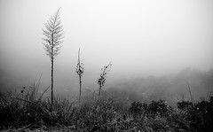 Foggy Morning, Santa Monica Mountains. (drpeterrath) Tags: california fog canon landscape la blackwhite losangeles dof outdoor depthoffield lacp 5dsr eos5dsr