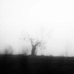 099.2016 (Francisco (PortoPortugal)) Tags: 0992016 20151221fpbo1955 rvores trees nevoeiro fog bw pb quadrada square valpaos portugal portografiaassociaofotogrficadoporto franciscooliveira