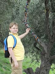 Sticker tree (BBuzz1) Tags: france eze fragonard westsalemhighschool wshsfrench westsalemhighschoolfrench