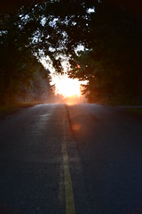 Sunset Drive (Meahgan Goeman) Tags: road trees sunset sun drive evening outdoor walk