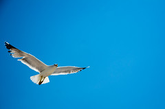 galeb (ivan stankovic) Tags: blue sky white bird nikon outdoor seagull greece more belo nebo tasos grcka thasos galeb plavo 1685mm d7000