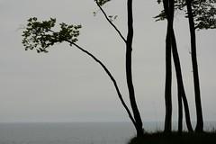 ber dem Abgrund (Caora) Tags: germany buchenwald nationalpark unesco rgen whitecliffs buchen kreidekste jasmund