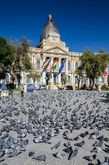 Las palomas y el Palacio Quemado (Andrs Photos 2) Tags: streets bolivia ciudad lapaz calles altiplano sudamerica elalto lasbrujas