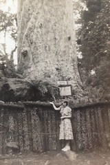Hannie with Largest Kauri tree. Early 1952 New Zealand (Yvonne Thompson) Tags: hugetree gianttree bigtree
