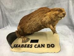 NMCB 74 Beaver (U.S. Navy Seabee Museum) Tags: beaver 74 seabees nmcb nmcb74 seabeemuseum