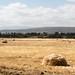 Ethiopia's fields
