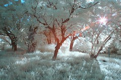 IMG_4043 (ysrl) Tags: canon ir taiwan infrared tainan eos350d ef24mmf28 ir